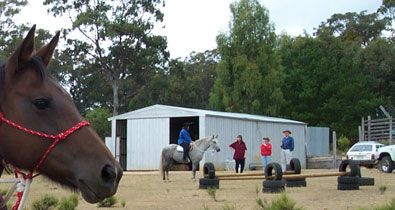 Horsing around at the back shed